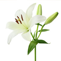 Cheryl Christine Langford Send Flowers November 17, 1951 - October 17, 2018 Cheryl Christine Langford passed away Wednesday, October 17, 2018 at her Port Angeles home. She was 66.A Celebration of Life is being planned for a View full obituary